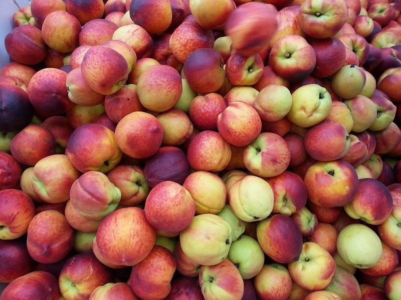 Peaches at Dickey Farms in Musella, Georgia