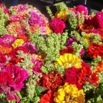 Fall flowers at the New Canaan Farmer's Market