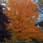 Fall color in Ridgefield