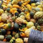 a-bin-full-of-gourds