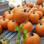 pumpkins-aplenty