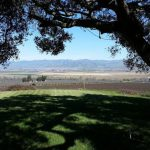 The vineyards from our oak tree