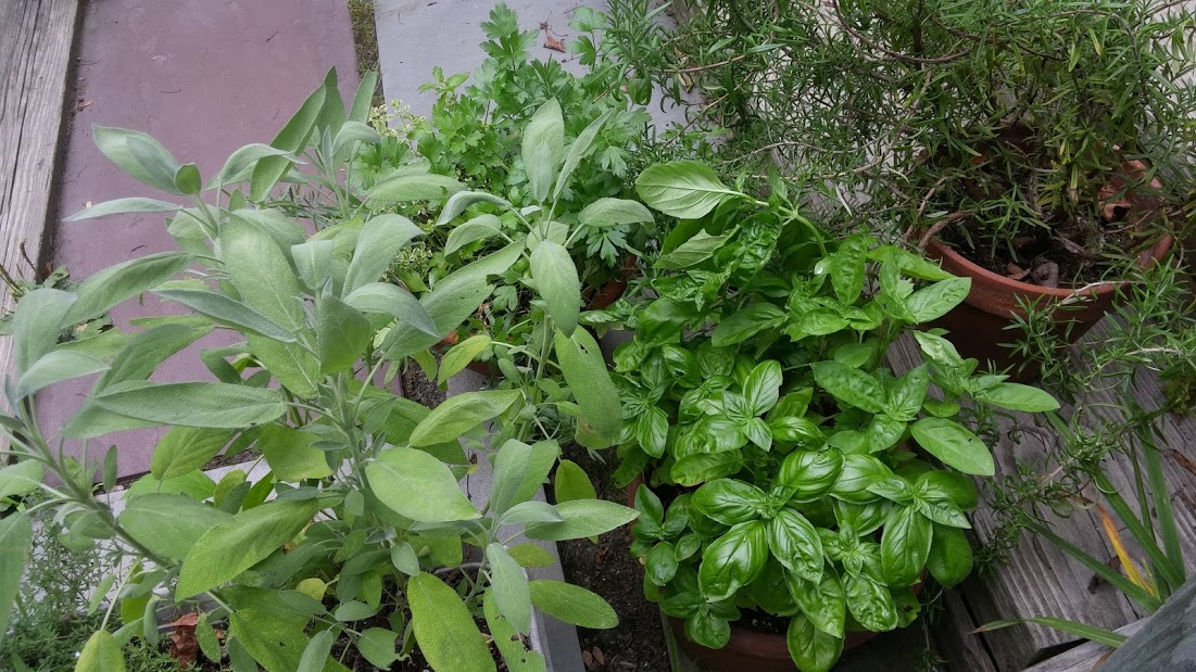 Front steps herbs