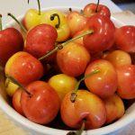 2. Rainier cherries, looking a little like miniature nectarines