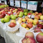 The array of apples available from Woodland Farm